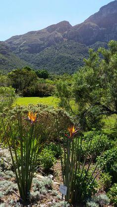Kirstenbosch South Africa, Garden, Plants, Garten, Gardens, Planters, Tuin, Plant, Planting