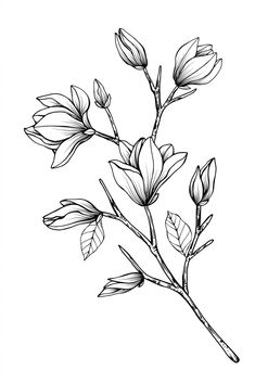 black and white line illustration of magnolia flow… – - Blumen ideen Flower Line Drawings, Flower Sketches, Drawing Sketches, Rose Flower Sketch, Drawing Flowers, Watercolor Flowers, Watercolor Art, Floral Drawing, Flower Doodles