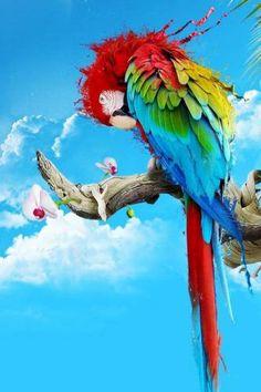 Colorful Parrot_wallpaper Pegit