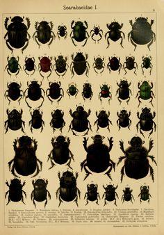 Die exotischen Käfer in Wort und Bild / - Biodiversity Heritage Library
