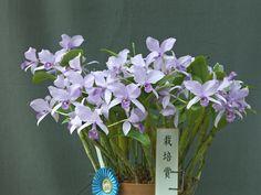 第48回 春の展示会 - 神戸蘭友会