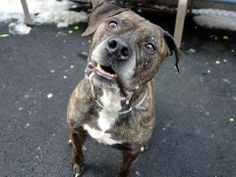 GONE!    ------------My name is HAKEEM. My Animal ID # is A0987781. Hurry! She's on the euth list for 1/2/14. At NYC Manhattan Ctr.  You can reserve her online with a $50 credit card deposit, then you must pick her up within 48 hours. Please hurry to save this lovely dog and share her link.