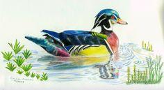 Carla Austen: Coloured Pencil