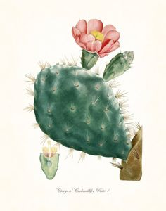 French Cactus Series No.1 - Botanical Canvas Art Print