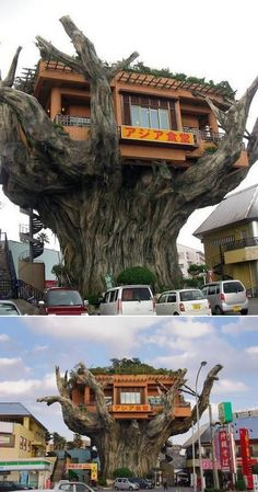 - This tree house restaurant is located on Highway 58 at the entrance of Onoyama Park in the south of Japan. The establishment, called Okinawa Tree H. Unbelievable Pictures, Amazing Photos, Amazing Facts, Tree Restaurant, Chinese Restaurant, Restaurant Design, Restaurant Restaurant, Restaurant Photos, Architecture Cool