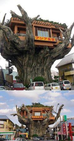 Esse restaurante fica em Okinawa, Japão, no topo de uma árvore Gajumaru, cerca de 6 metros acima do solo. Infelizmente, não é uma árvore Gajumaru de verdade, e sim de concreto. Os clientes tem que entrar em um elevador no interior do tronco para alcançar o restaurante.