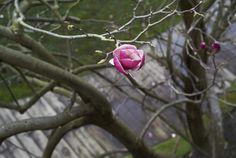 El magnolio Deluz Fotografía: María Gorbeña / Estilismo: La alucinante Primavera