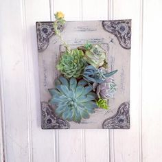 Oh, so pretty! Hand made from a distressed scroll picture mounted with hardware so it can be table top or wall decor. Designed with a variety of succulents planted in just the right spot! Add on 1,2 or three air plants to really make your garden pop! These cool little plants do not