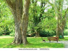 Benches under Plane trees in Chateau Garden Kromeriz,(UNESCO), Czech republic. Plane Tree, Czech Republic, Benches, Planer, Photo Editing, Royalty Free Stock Photos, Trees, Garden, Room