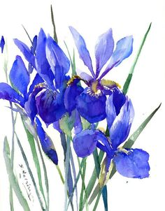 Blue purple Irises Painting, original watercolor painting, 12 X 15 in, by ORIGINALONLY on Etsy