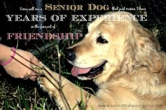 Old dogs can make the best friends. They're hearts are always full of love <3