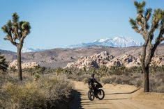 A desert bikepacking route from San Diego to San Bernadino/Los Angeles, via the Anza-Borrego State Park, the Salton Sea, and Joshua Tree National Park. Joshua Tree National Park, National Parks, Anza Borrego State Park, Bike Packing, Salton Sea, Keep Fit, State Parks, Touring, San Diego