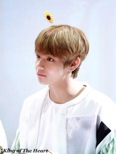 Sunflower boy Tae