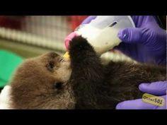 baby otter holds a bottle