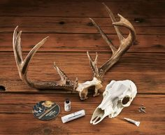 Antler Mounting Kit - Give Hunting Spirit On Your Wall. $45