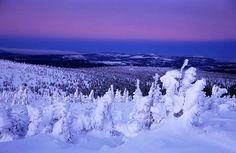 樹氷 frost-covered trees