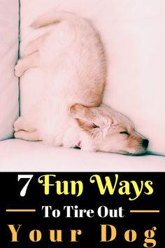 dog training,dog hacks,smart dog,teach your dog,dog learning Dog Training Classes, Training Your Dog, Training Tips, Tiny Puppies, Cute Puppies, Puppies Tips, Best Toys For Puppies, Pomsky Puppies, Yorkies