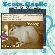 Scottish Gaelic Phrases, Scottish Words, Gaelic Words, Scotland Travel, Scotland Trip, Celtic Music, Word Of The Day, Languages, Good To Know