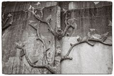On a wall in the city Redon in France there where trees from concrete or cement with a lot of birds in it.