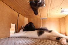 Ceiling Cat Training Center