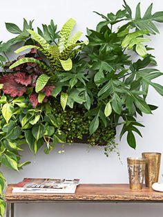 Indoor Gardening - Gardening in the Winter - Good Housekeeping