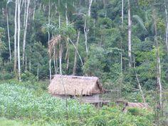 Tudo que eu precisava hoje...  Residência típica da Floresta Amazônica
