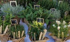 Tableaux - erbe aromatiche