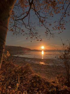 Shoreline Sunrise - Dalgety Bay - Scotland #sunset tree landscape nature lake reflection beautiful