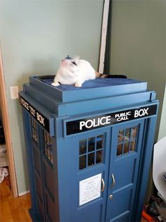 Unique cat house designed to look like TARDIS police call box time machine from Doctor Who television series.   TARDIS Fort - half scale replica created by Astromark for his cat Kaylee.