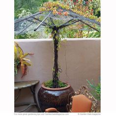 You don't have to throw out an old patio umbrella — use it to support a vine! Just remove any fabric that's left and replace it with chicken wire. Put it in the ground, or even a large container filled with potting mix, like the one at left that's planted with a fast-growing Virginia creeper (Parthenocissus quinquefolia). And if the post and ribs are made of wood, apply a coat of outdoor water-proof sealant to help it stand up to moisture from the potting medium, weather and watering.