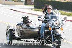 """Emma Zen Chiapuzio """"Biker Dog"""""""