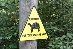 Turtles, being ectotherms, store heat. They heat up in the sun.