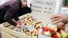 Frugtfestival i Sakskøbing | Visitlolland-falster