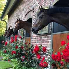 Horses - Art Of Equitation Dream Stables, Horse Stables, Horse Barns, All The Pretty Horses, Beautiful Horses, Animals Beautiful, Beautiful Scenery, Cute Horses, Horse Love