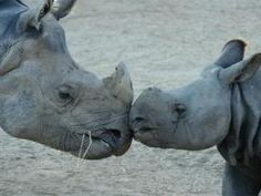 Mom and baby rhino