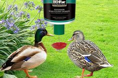 19 Best Automatic Duck Feeder Images Backyard Chickens Poultry Ducks
