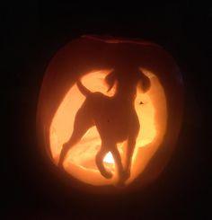 Happy Hallowe'en!!! I couldn't resist carving a vizsla pumpkin.