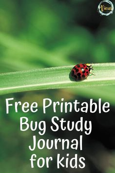 This printable bug study journal will inspire kids to get out and explore the world of creepy crawlies. With 9 pages of prompts and activities for bug study, there are plenty of fun ways to learn. Preschool Schedule, Preschool At Home, Play Based Learning, Learning Through Play, Educational Activities, Preschool Activities, Nature Hunt, Study Journal, Summer Activities For Kids