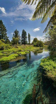 Hamurana Spring Reserve