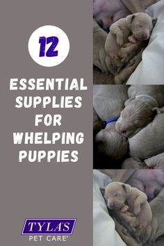 Whelping puppies is a big job, we have made it a lot easier by finding out exactly what you need to raise the cutest puppies. Sending them off to their new homes happy and healthy # Whelping box, Dog Dog Whelping Box, Whelping Puppies, Puppy Box, New Puppy, Dog Dental Care, Pet Care, Big Dogs, Small Dogs, Great Swiss Mountain Dog