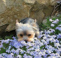 Springtime...smelling the phlox