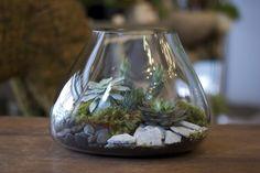 Recycled Glass Volcanic Terrarium!