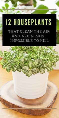 # ing Houseplants That Clean The Air And Are Almost Impossible To Kill According to the NASA studies, the ing plants clean indoor air very well!According to the NASA studies, the ing plants clean indoor air very well!