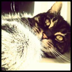 Cat selfie,Tegan is so vain :)  Via Instagram http://ift.tt/1aQn0ud