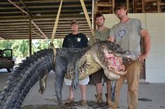 WHAT IS THE LARGEST CAPTURED RATTLESNAKE EVER FOUND - Google Search