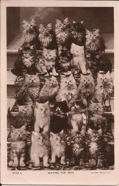 Real photo vintage cats! Collection Clarissa
