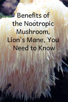 Powerful Nootropic Mushroom, Lion's Mane & The Benefits Herbal Remedies, Natural Remedies, Mushroom Grow Kit, Mushroom Tea, Garden Mushrooms, Growing Mushrooms, Edible Mushrooms, Healing Herbs, Arrows