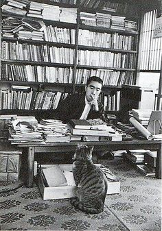 Mishima... that cat looks kinda huge, probably due to the camera angle. even then though. it's huge