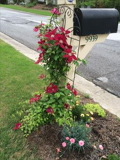 The plant grouping around my mailbox. It includes a clematis vine growing in the mailbox trellis, a dianthus perennial, some creeping Jenny ground cover and Angelina sedum. Love the look of it and the ease of care.