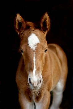 Precious and Innocent Foal.